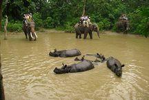 Junlge Safari in Nepal