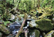 Laurissilva Forest Madeira
