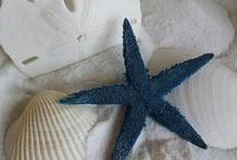 Seashell/Ocean Stuff / by Jennifer Galloro