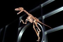 My Dinosaur Photography