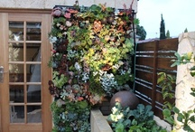 HOME Outdoor Plant Wall