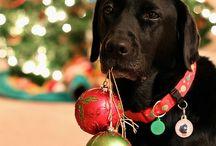 Dog Photog!!! / by Kayla Shepard