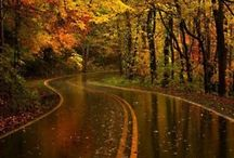 Fall Time / by Andrea Peterson Ludtke