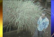 WNEP: Caught on Camera