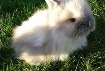 Dwerg konijntjes