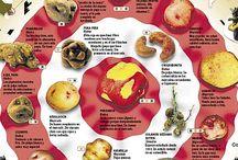 Sabores del mundo / El mundo se disfruta y se conoce a través de su gastronomía.