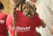 Animal Lovin' Volunteer Opportunities