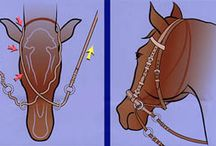 Horses / by Keri Callahan