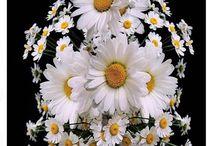çiçekler
