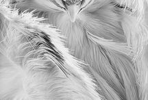 Pigeons (Голуби)