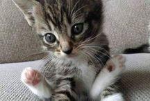 Zvieratá Cuty