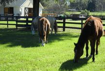 Florida Farm / All things related to our Florida Horse Farm.