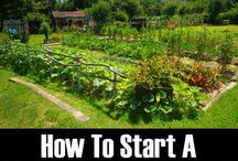 Permaculture / Permaculture best practices, gardening tips, food forests, back to eden gardening
