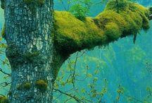 Stromy & korene / Trees & Roots