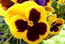 Bloemen / Bloemen eigen tuin en elders!