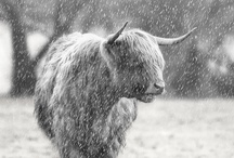 Animals / by Susan Geitz Blessing