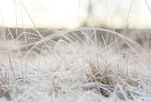 Vinter 2013 / Naturbilder