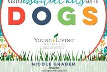 YL for dogs