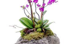 Orquídeas em pedras