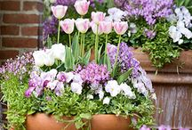 Spring Planting in containers