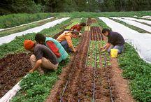 Market Gardening / by Elisabeth Bond
