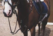 Horses/Pferde