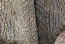 Elaphants