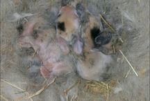 lilys rare colour babies
