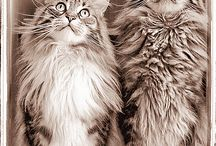 the most beautiful cats!!!