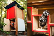 Chicken coops / by Claire Knibbs
