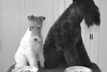 Peluquería Canina Truka / Peluquería Canina