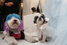 "Dog Photos / The wedding in New York City Thursday night of Baby Hope, a Coton de Tulear, to Chilly Pasternak, a Poodle, set a new record as the most expensive animal wedding in history - and doubled as a black-tie gala benefiting the Humane Society of New York. Including Baby Hope's custom-sewn gown, the lighting design, a ""Cake Boss"" cake, and the dulcet services of the best orchestra in Gotham, the price tag came to $158,187.26. (The previous record-holder for a pricey pet wedding cost a ""mere"" $16,000.)"