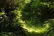 Metsän valtakunta 2 /Secret forest