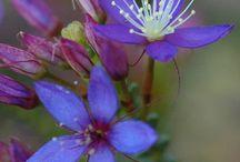 Universal Flora / La Flora Celestial y Divina