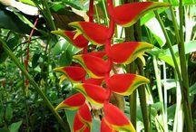 subtropical garden