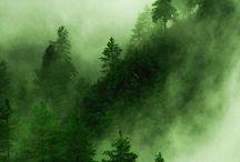 DP Nature