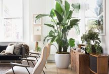 Plant woonkamer
