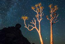 Stars / Our beautiful galaxy. Starry starry night.