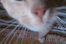 Tonto the cat