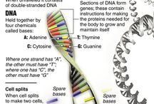 Will DNA Help me Find My Greats.... / The first step is to understand how DNA works, figuring out what DNA Tests to take, who to ask to do a DNA test and then to wait till you hear from a potential cousin, or reach out to others......