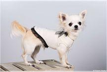 Abbigliamento da cani by Regalidacani / Cappottini, impermeabili, pull e tubolari su misura e in tanti colori per i nostri amici pelosi