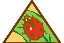 Brownies - (Legacy) Bugs / Requirements for Brownie Bug Badge: Step 1: Draw a bug poster. Step 2: Try a bug craft. Step 3: See bugs in action. Step 4: Explore bug homes. Step 5: Take a bug field trip. / by Girl Scouts SU24