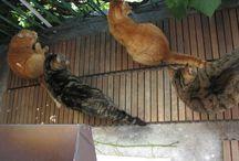 Koty, kociaki, kocięta