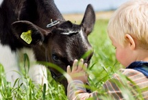 Cows / Our cows give us our most important ingredient, milk, which is why we love them so much! MOO!