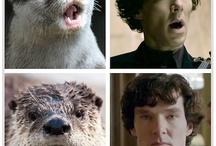I am Sherlocked / by Rachel Steward