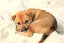 Puppy and Dog Care in Sunrise Florida