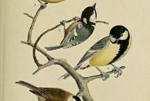 Ptáci, hnízda
