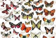 Скрапбукинг  Бабочки