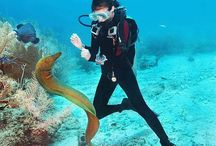 Scuba Diving / Scuba diving is overwhelmingly the most common underwater activity. The depths of the ocean have forever enticed us and exploration of this underwater ecosystem is not only exciting but also de-stressing.