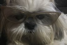 My Dog Cezi